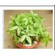 植物能量土